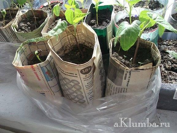 Мешочки для рассады, сделанный в китае, цена, размеры, видео || сделанные в китае мешочки для рассады