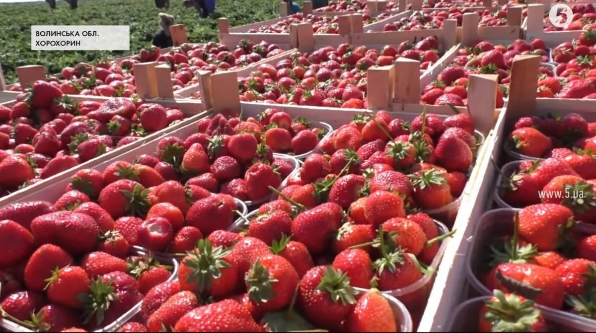 Чем подкормить клубнику после сбора урожая