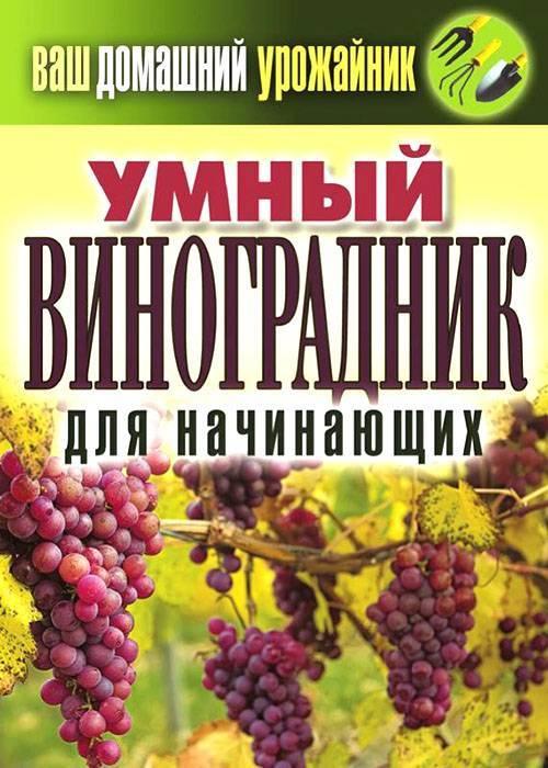 Уход за виноградом весной после зимы: открытие, подвязка, обрезка, обработка, подкормка