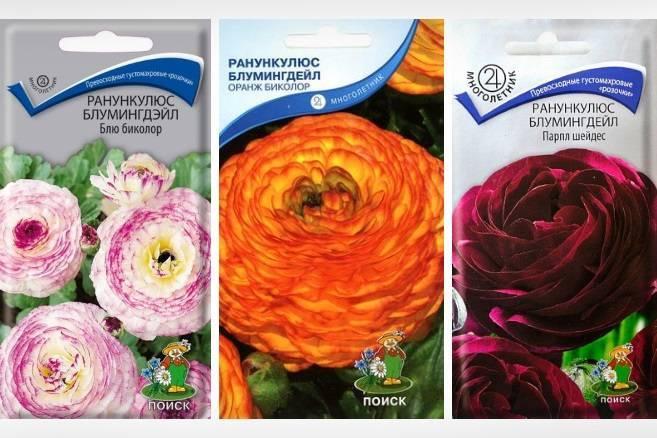 Секреты выращивания лютиков в саду, посадка и уход за цветами