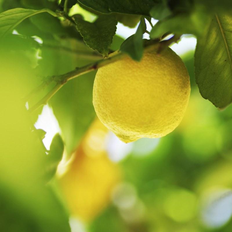 Эфирное лимонное масло: применение, свойства, польза и вред