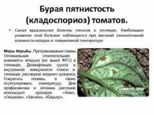 Болезни томатов — описание с фото, способы лечения