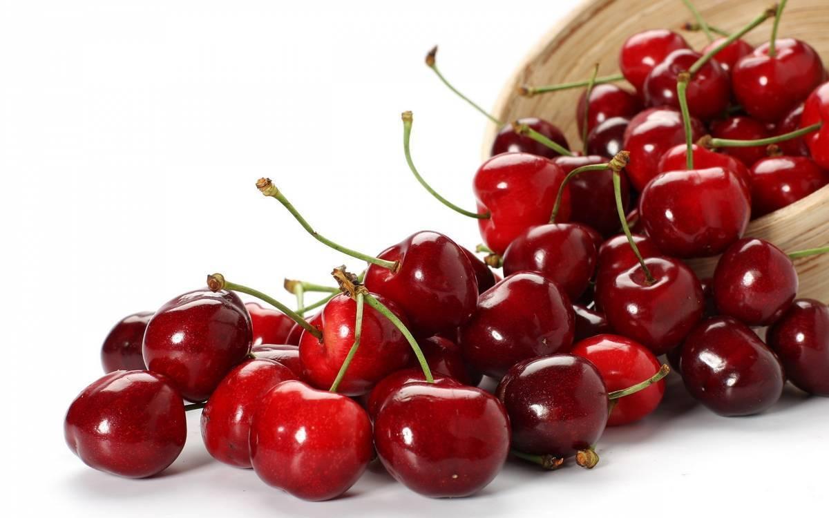 Болезнеустойчивая вишня харитоновская — особенности выращивания этого сорта