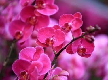13 комнатных растений, которые полезно держать дома