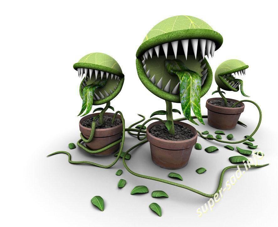 Ядовитые дикорастущие растения западной сибири