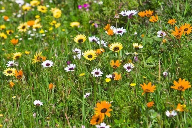 Вегетация растений — что это такое и чем отличается от вегетационного периода