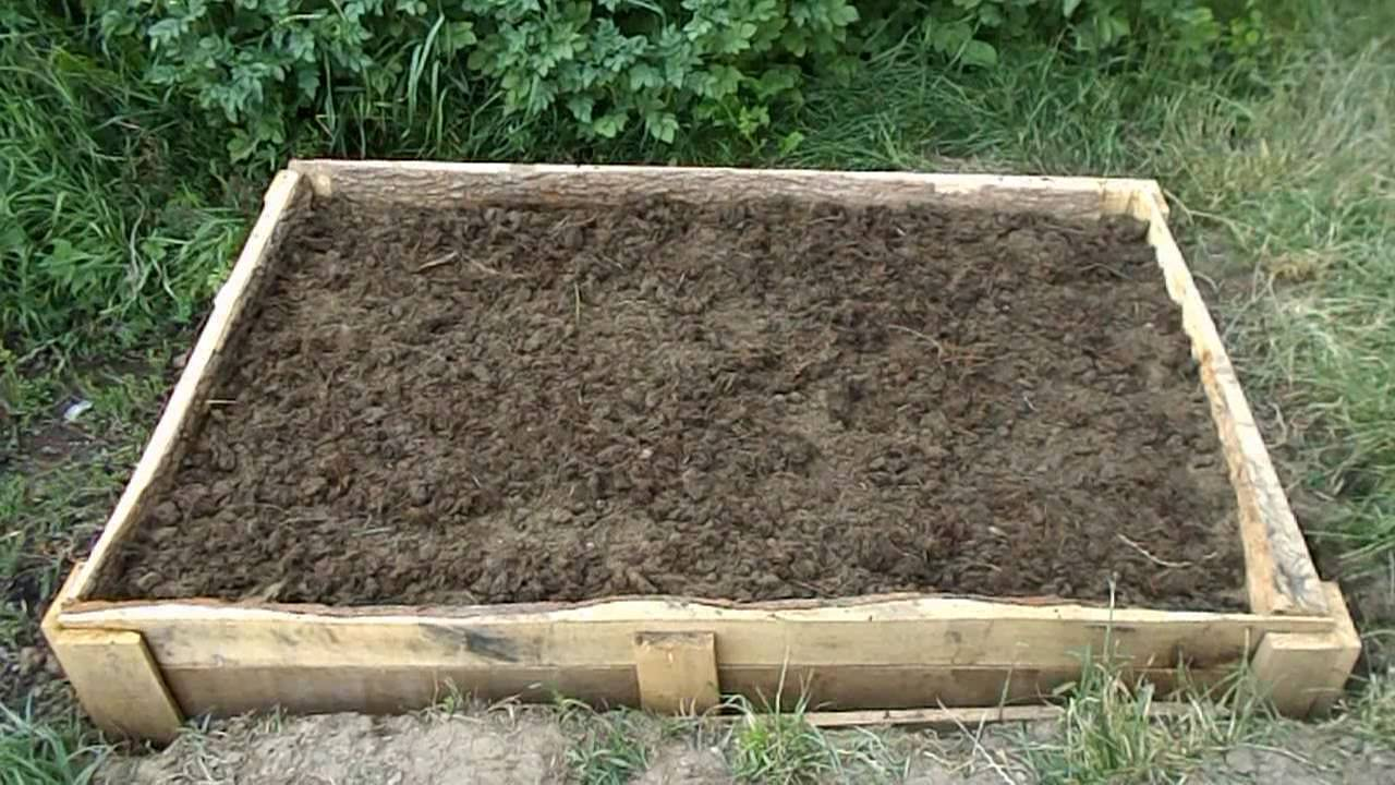 Выращивание клюквы, способы и уход