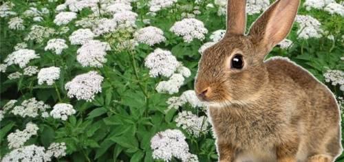 Чем кормить кроликов – составление разнообразного рациона