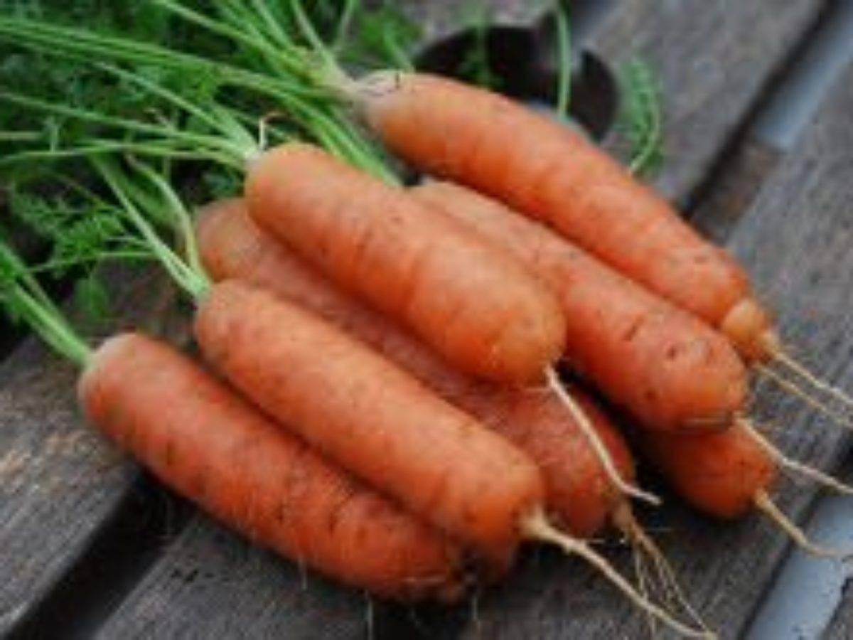 Как вырастить крупную и сладкую морковь?