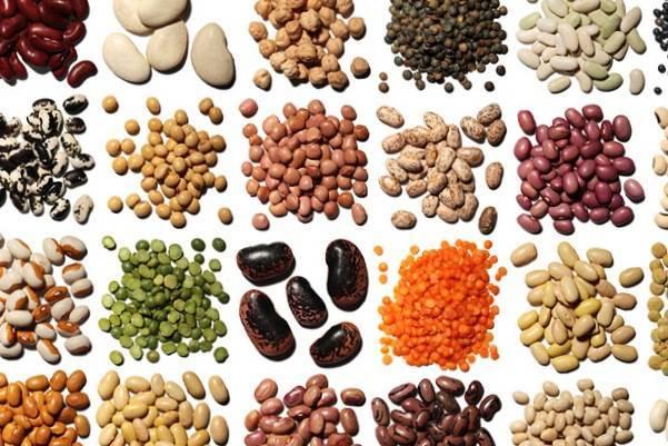 Растение люпин: лечебные свойства и применение