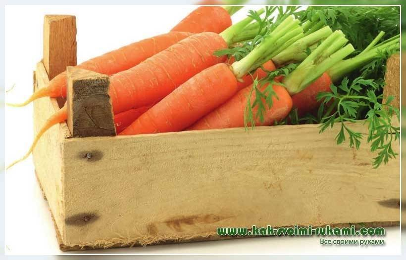Как хранить морковь в погребе зимой - обзор лучших способов и практические рекомендации