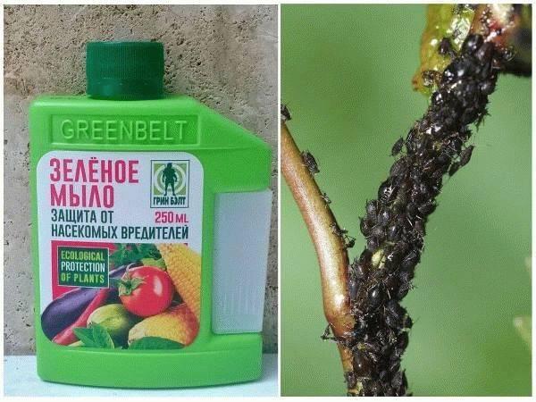 Как правильно использовать зеленое мыло для защиты растений от вредителей