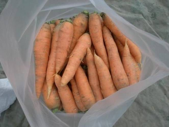 Боремся за урожай — лучшие способы, как сохранить морковь свежей до следующей весны!