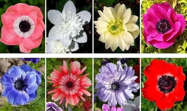 Как вырастить цветы к 8 марта дома