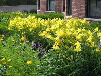 Витамины со слезами: как правильно посадить лук