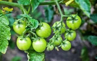 Правильное применение комплексных удобрений для томатов