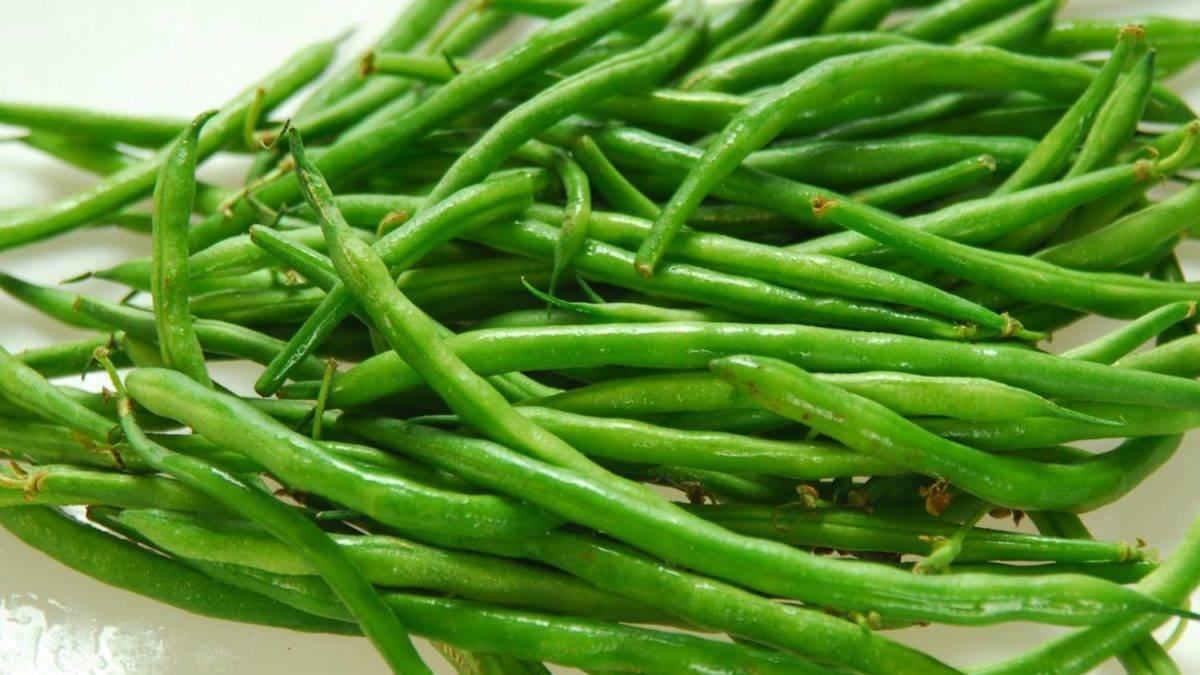 Стручковая и спаржевая фасоль: как правильно посадить и вырастить зеленую фасоль