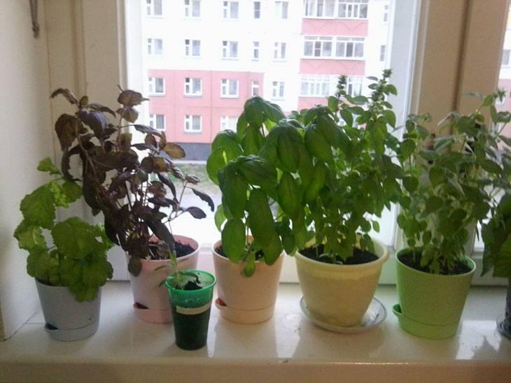 Бизнес-план выращивания улиток ахатин в домашних условиях