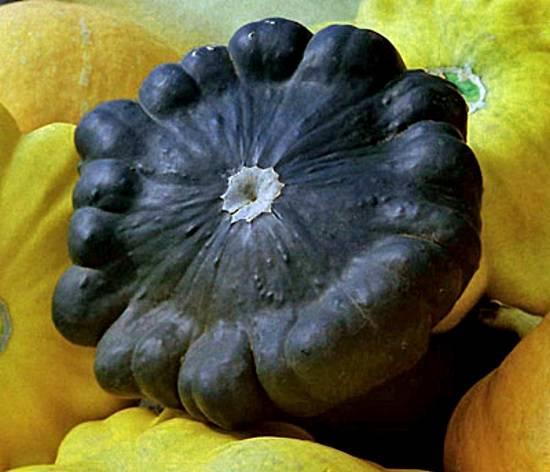 Сорта патиссонов для консервирования. выращивание патиссонов: секреты богатого урожая