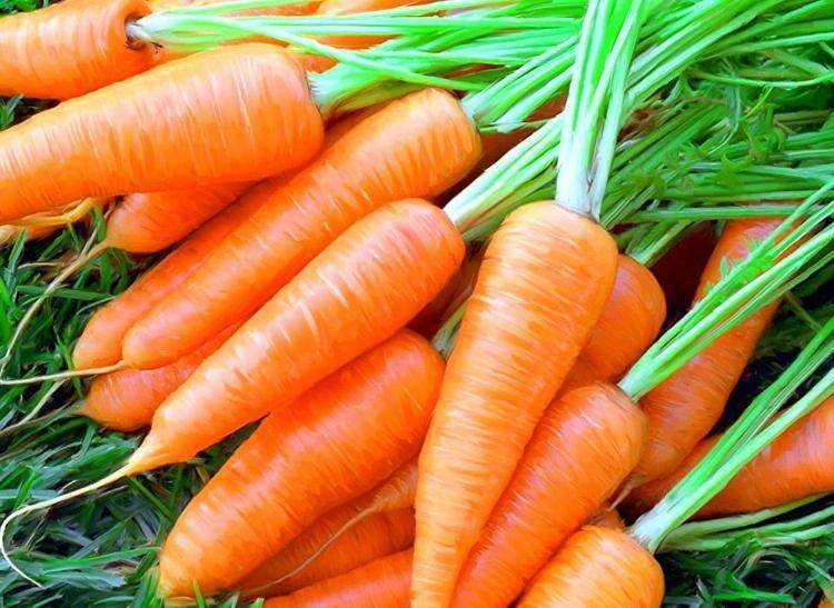 Какие полезные элементы внести под морковь – признаки недостатка питательных веществ