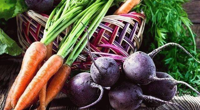 Подкормка моркови в открытом грунте