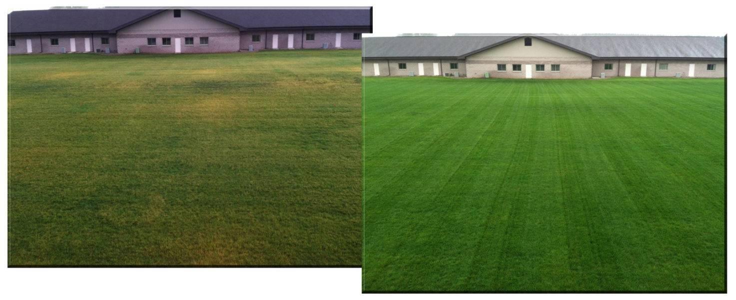 Удобрение для газона: когда подкормить траву