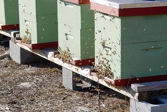 Популярные виды ульев для пчел