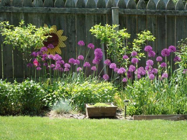 Необычные сорта голубых елей – интересное решение для вашего сада