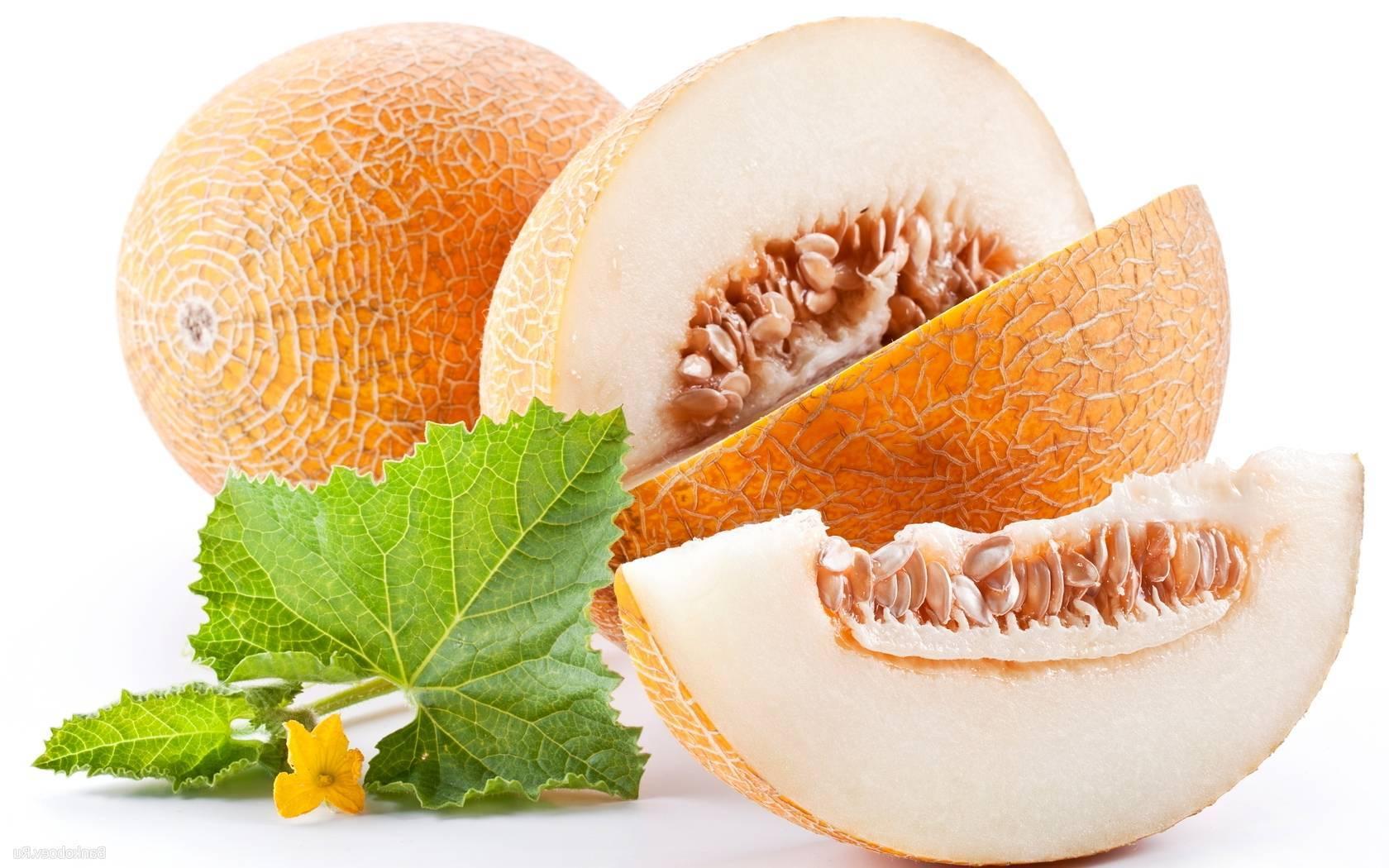 Дыня, польза и вред для здоровья, калорийность