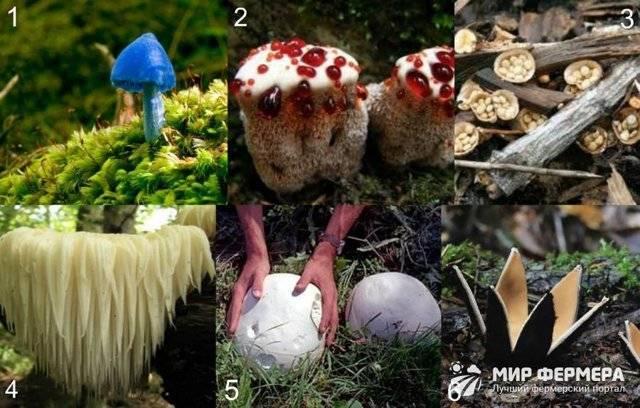 Какие трубчатые грибы ядовитые