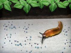 Слизней на даче победим — урожай свой сохраним!
