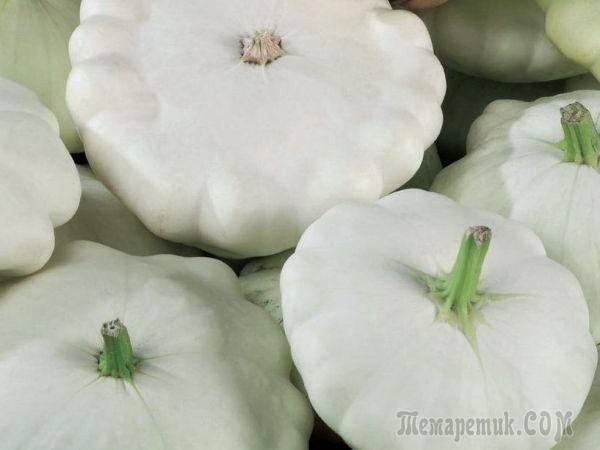 Овощные цветы - патиссоны
