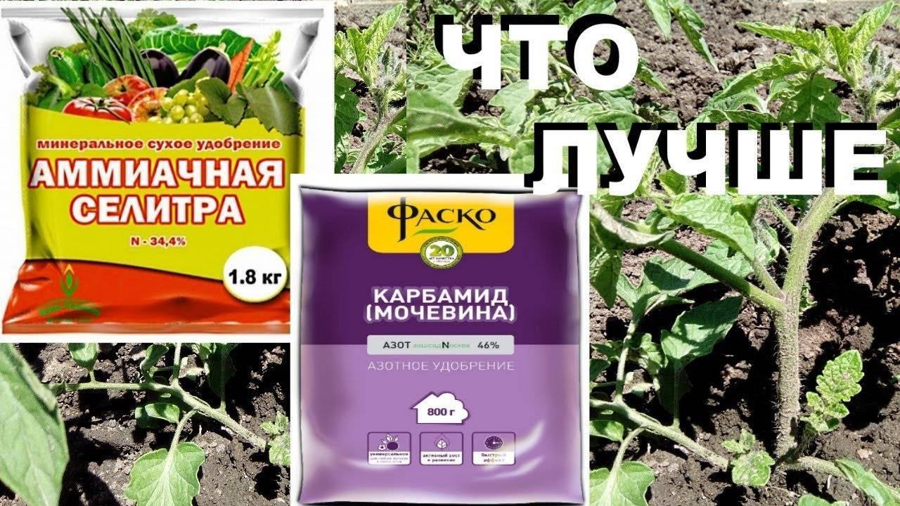 Использование селитры для подкормок растений на огороде и в саду
