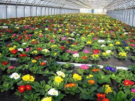 Выгонка луковичных: как вырастить тюльпаны, гиацинты, нарциссы, крокусы на новый год и 8 марта
