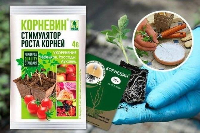 5 народных средств для быстрого укоренения черенков