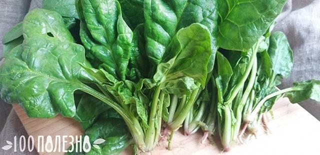 Как получить урожай жирнолистного шпината? описание культуры и особенности выращивания