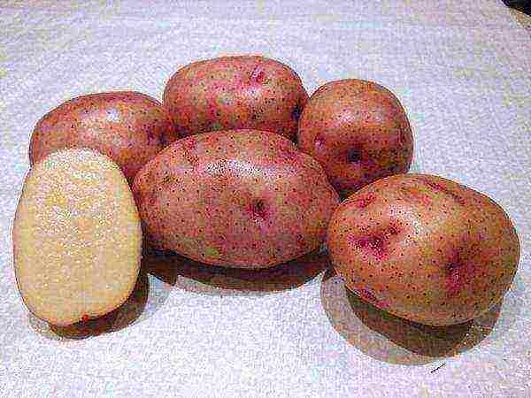 Лучшие сорта картофеля на 2020 год: самые вкусные и урожайные
