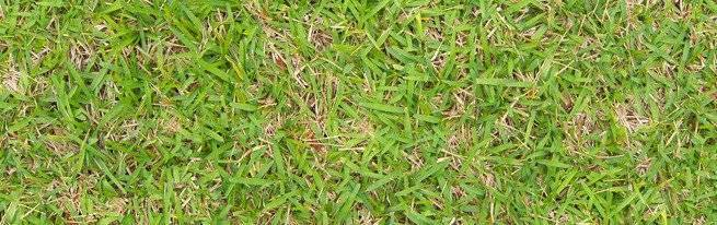 Можно ли летом сеять газонную траву. когда сеять газонную траву - осенью или весной