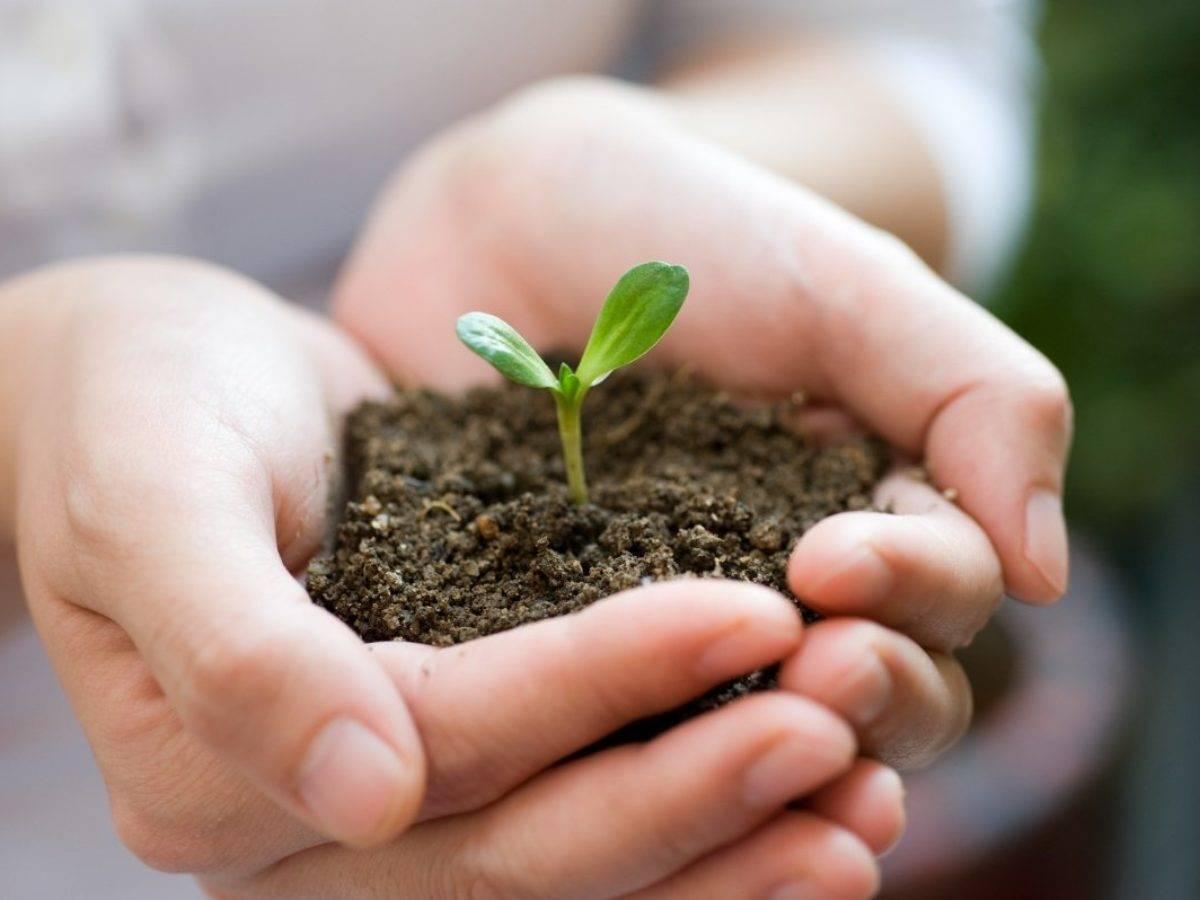 Субстраты для посева семян и выращивания рассады – какой лучше?