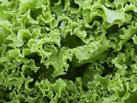 Выращивание листового салата из семян в домашних условиях, теплице и открытом грунте когда сажать