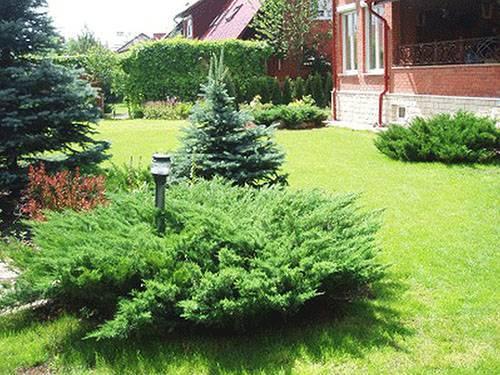 Удобрения для хвойных растений, видео