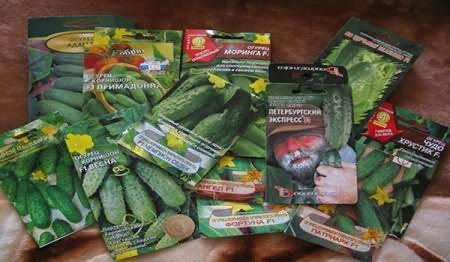 Как вырастить рассаду в яичной скорлупе, что с ней делать
