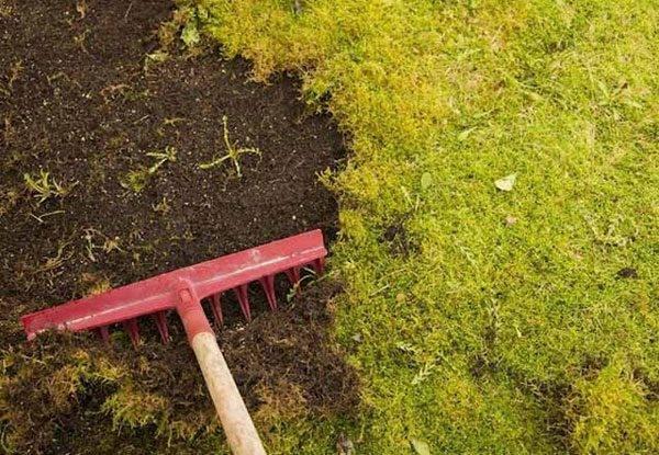 Мох на газоне или как избавиться от надоедливого сорняка?