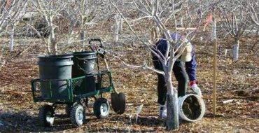 Чем важна подкормка молодых яблонь летом и какие удобрения следует использовать? лучшие советы агрономов