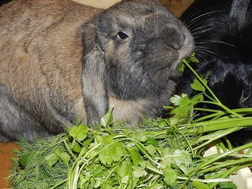 То что нас окружает — чем из этого можно кормить кролика?