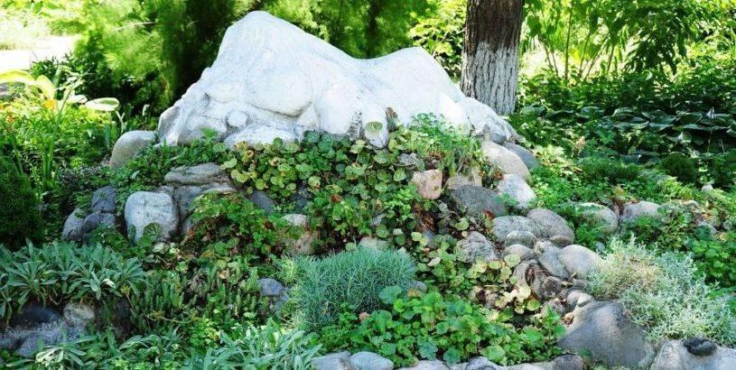 Альпийская горка на даче своими руками: особенности дизайна, выбор места, расстановка камней, растения для альпийской горки, этапы самостоятельного возведения