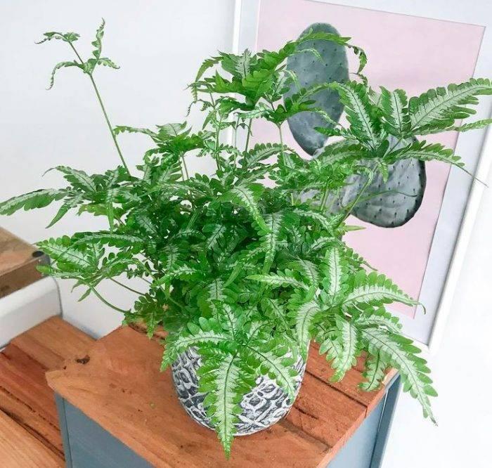 Суккуленты: все о правильном уходе за необычными растениями в домашних условиях