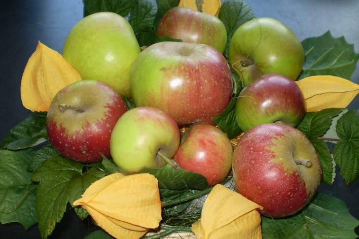 Сушёные яблоки: храним дома правильно