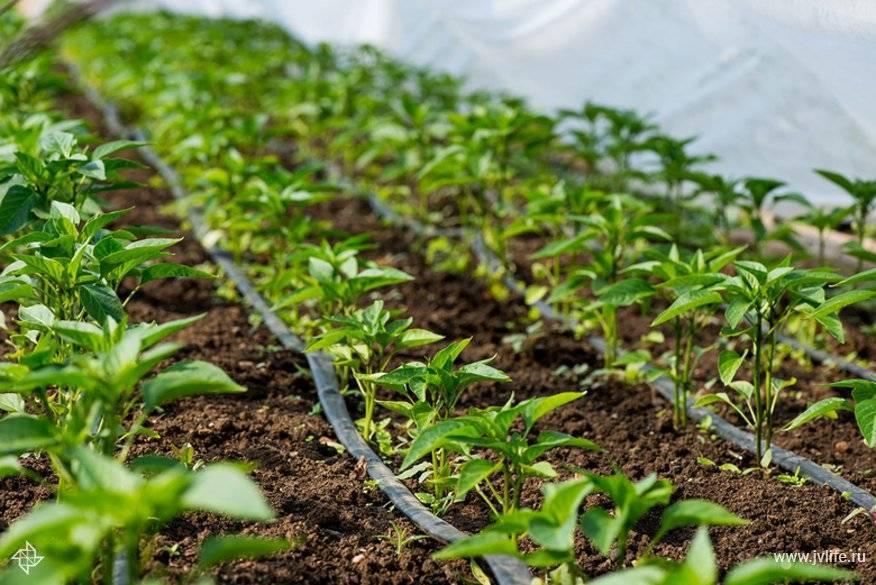 Импульсный и веерный распылители воды для огорода