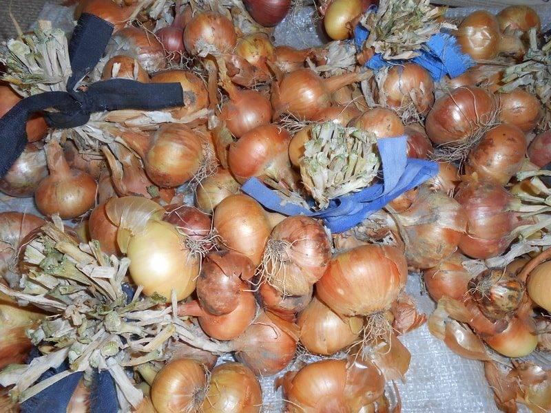 Луковая шелуха: польза и вред необычного продукта